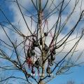 Album The Poison Tree