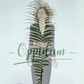 Album Oppidum